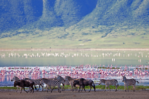 Zebras & Flamingos Around Ngorongoro Crater - Gay Adventures