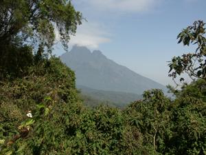 View of Mt. Bisoke Behind Trees - Gay Travel Adventures