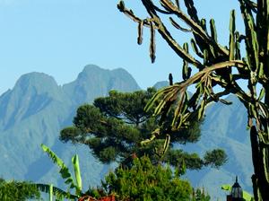 Virunga Mountains - Gay Tours
