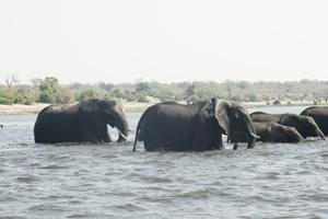 Elephants Crossing Through Lake - Africa Gay Men Tours