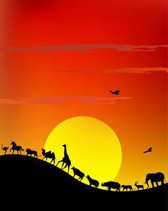 African animals walking in front of a sunset - Africa Gay Men Safari
